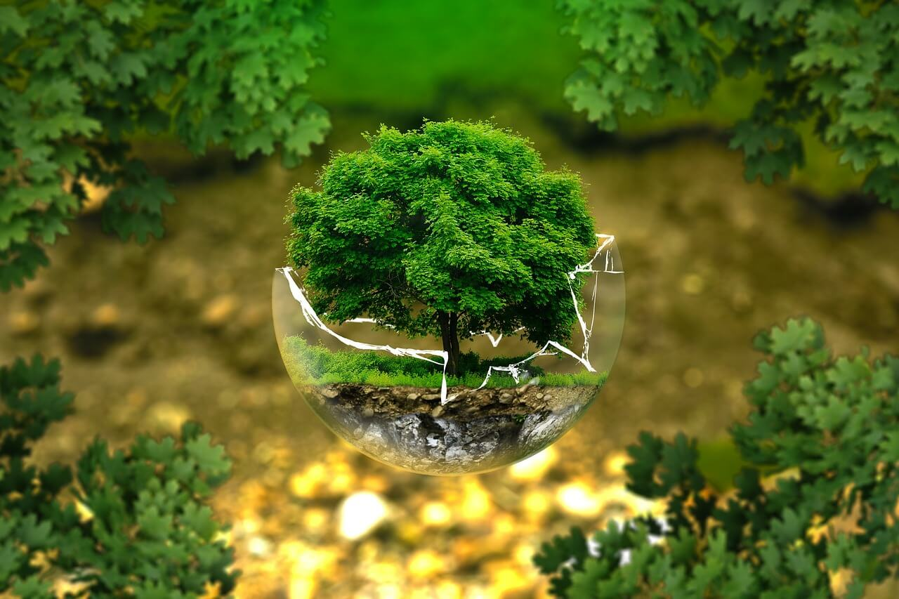 thumbnail of Dream of Bonsai showing a floating bonsai
