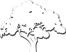 Dream of Bonsai favicon